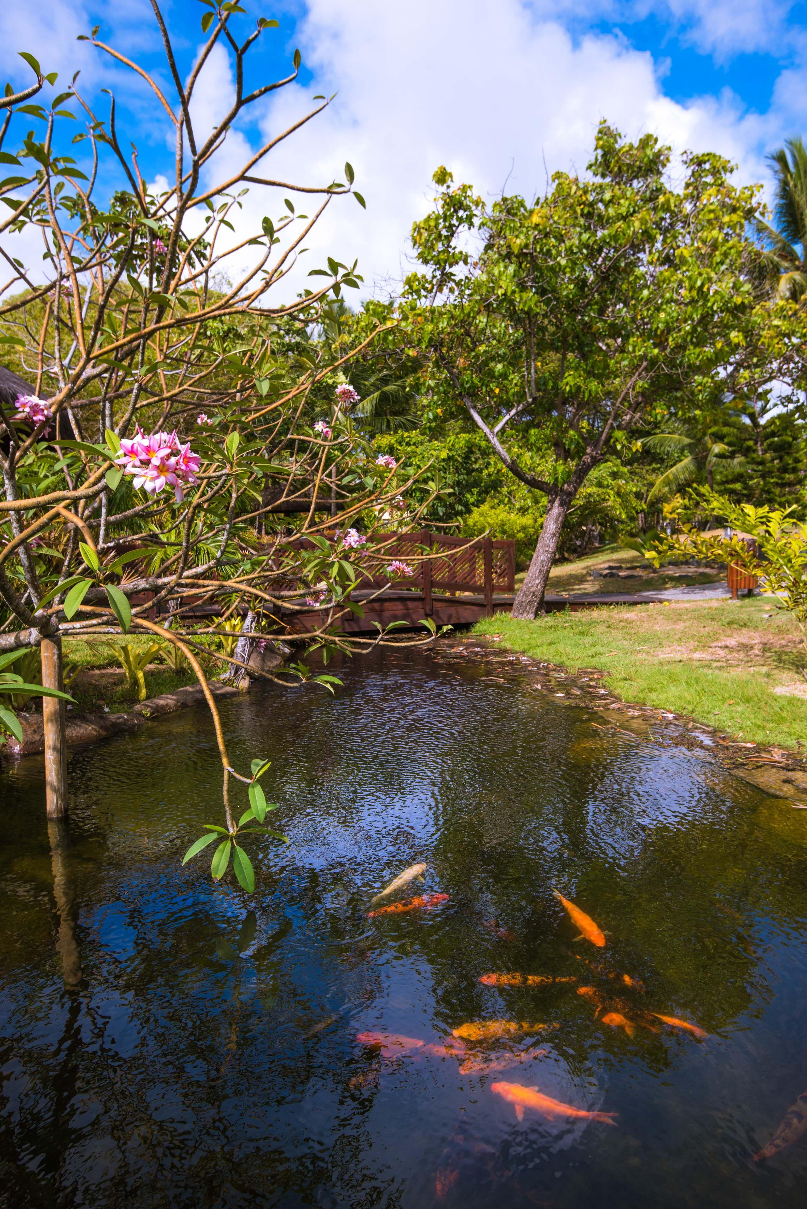 Natureza Vila Gale Eco Resort Do Cabo Pernambuco Brasil