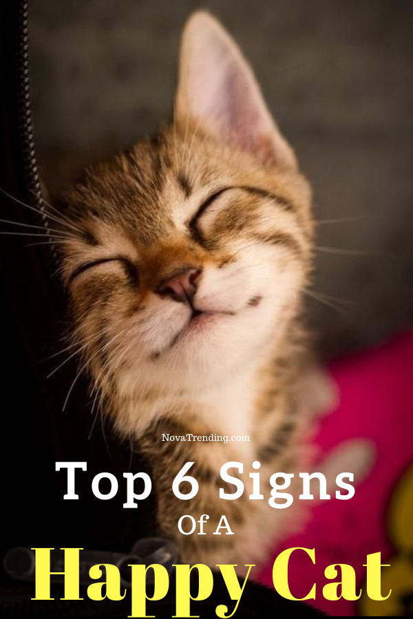 Top 6 Signs That Show Your Cat Is Happy in 2020 Cat