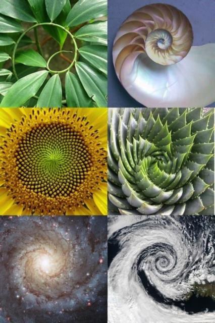 Nombre D Or Nature Geometrique Motif De La Nature Geometrie Sacree