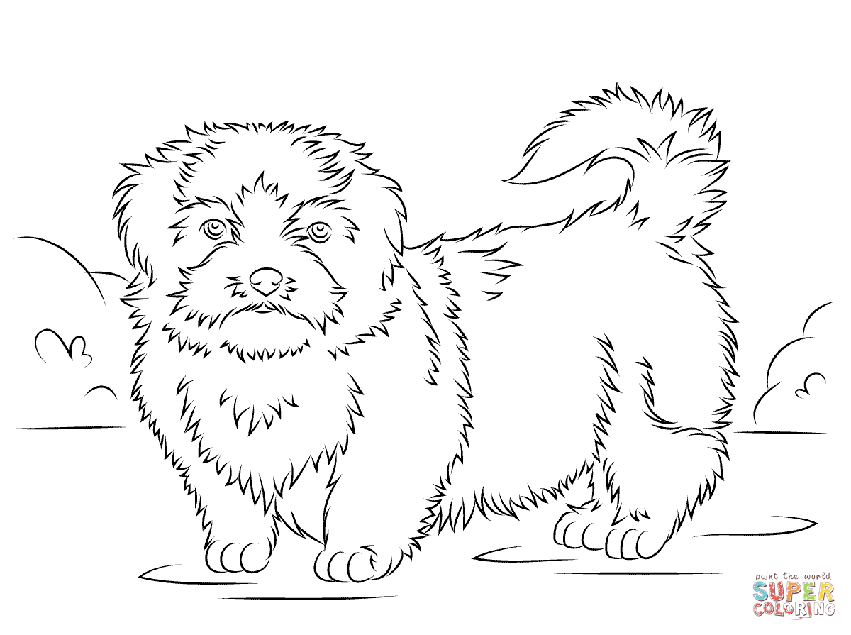 Shih Tzu Coloring Page Dog Coloring Page Puppy Coloring Pages Coloring Pages