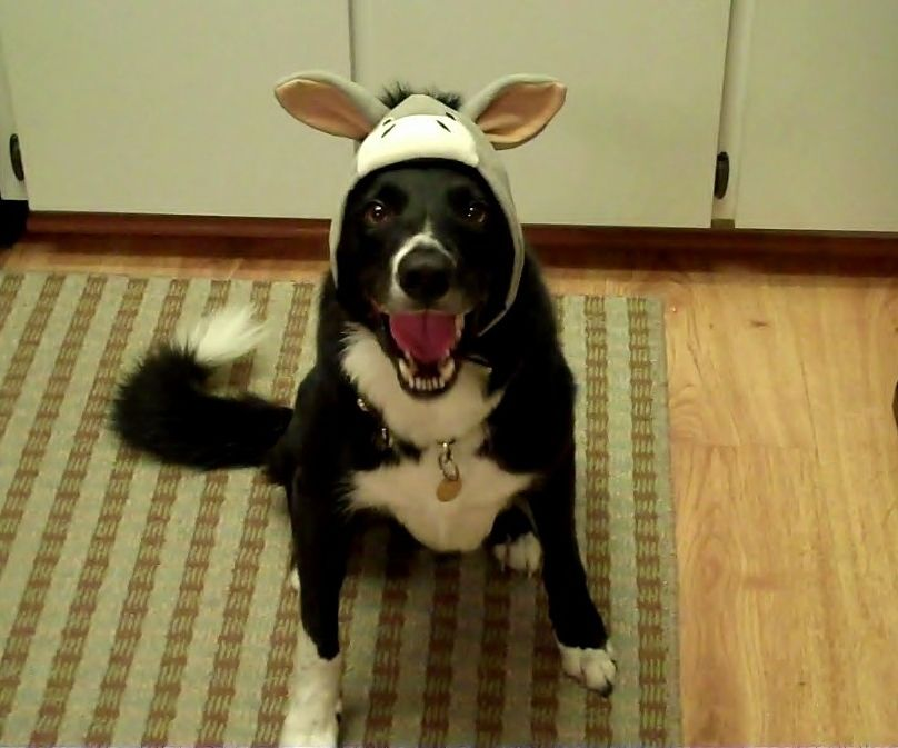 Great Big Smile Cause It S Friday Best Dog Breeds Herding Dogs