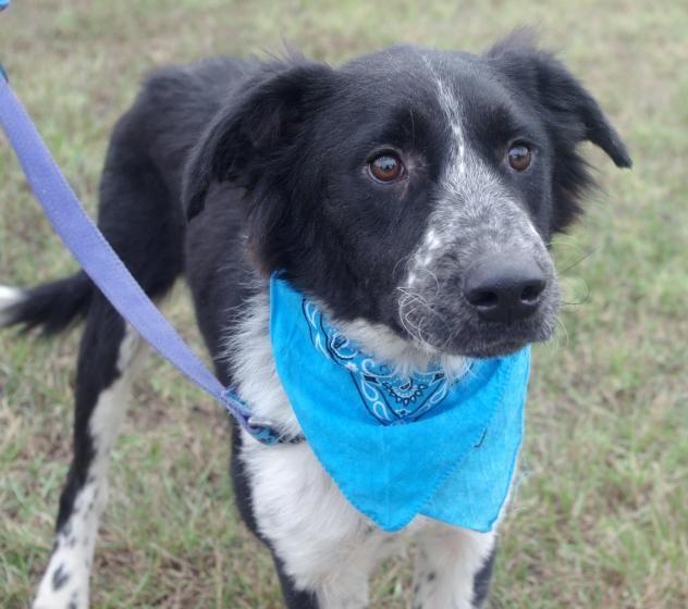 Adopt Jupiter On Pet Life Adoption Animal Shelter
