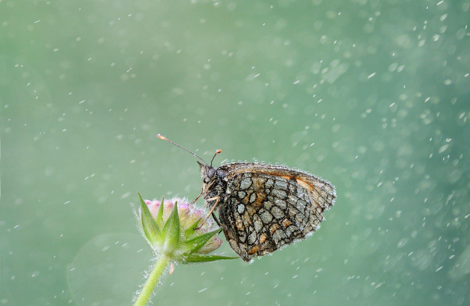 Animal  Butterfly  Rain Wallpaper