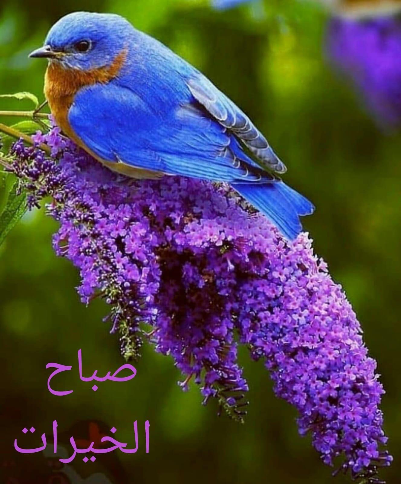 Pin By Zainab Basu On Sabah Al Khair Animals Animal Pictures Pet Birds