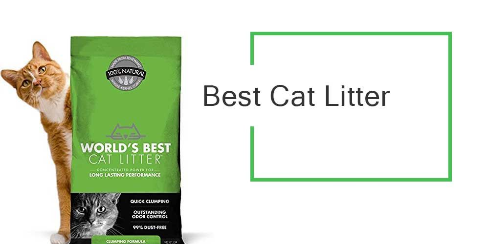 Best Cat Litter 2017 Buyer 039 S Guide Best Cat Litter Cat Litter Natural Cat Litter