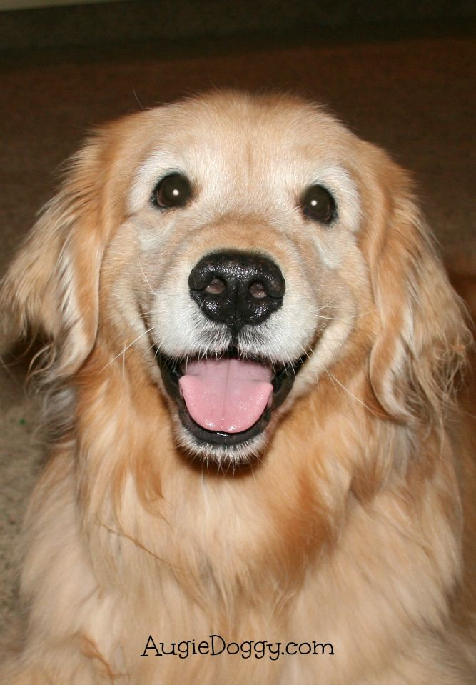 Now That S A Happy Face With Images Dogs Golden Retriever
