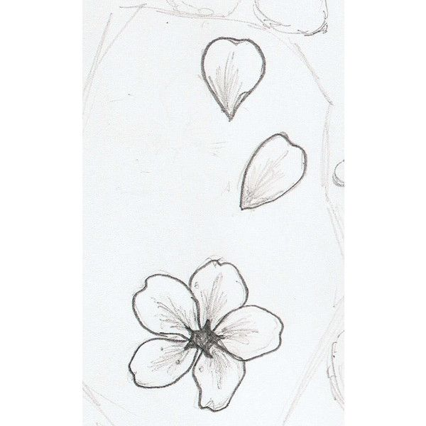 Cherry Blossom Petal Tattoo Photos Good Pix Gallery Via Polyvore