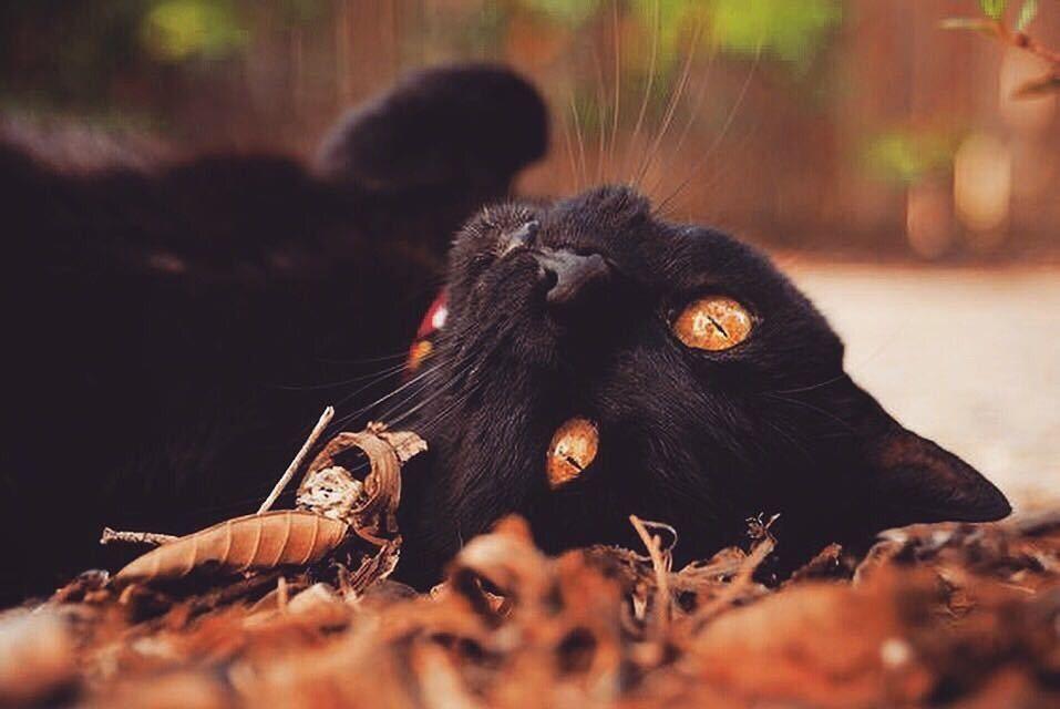 ☦︎Nu Goth & Dark/Halloween Aesthetics☦︎ | Autumn witch, Black cat aesthetic,  Halloween cat