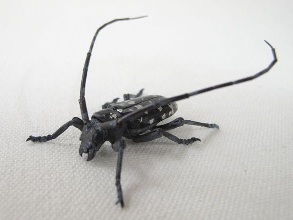 自在置物の虫たち2 満田晴穂先生作2 昆虫アート 虫 メタルアート