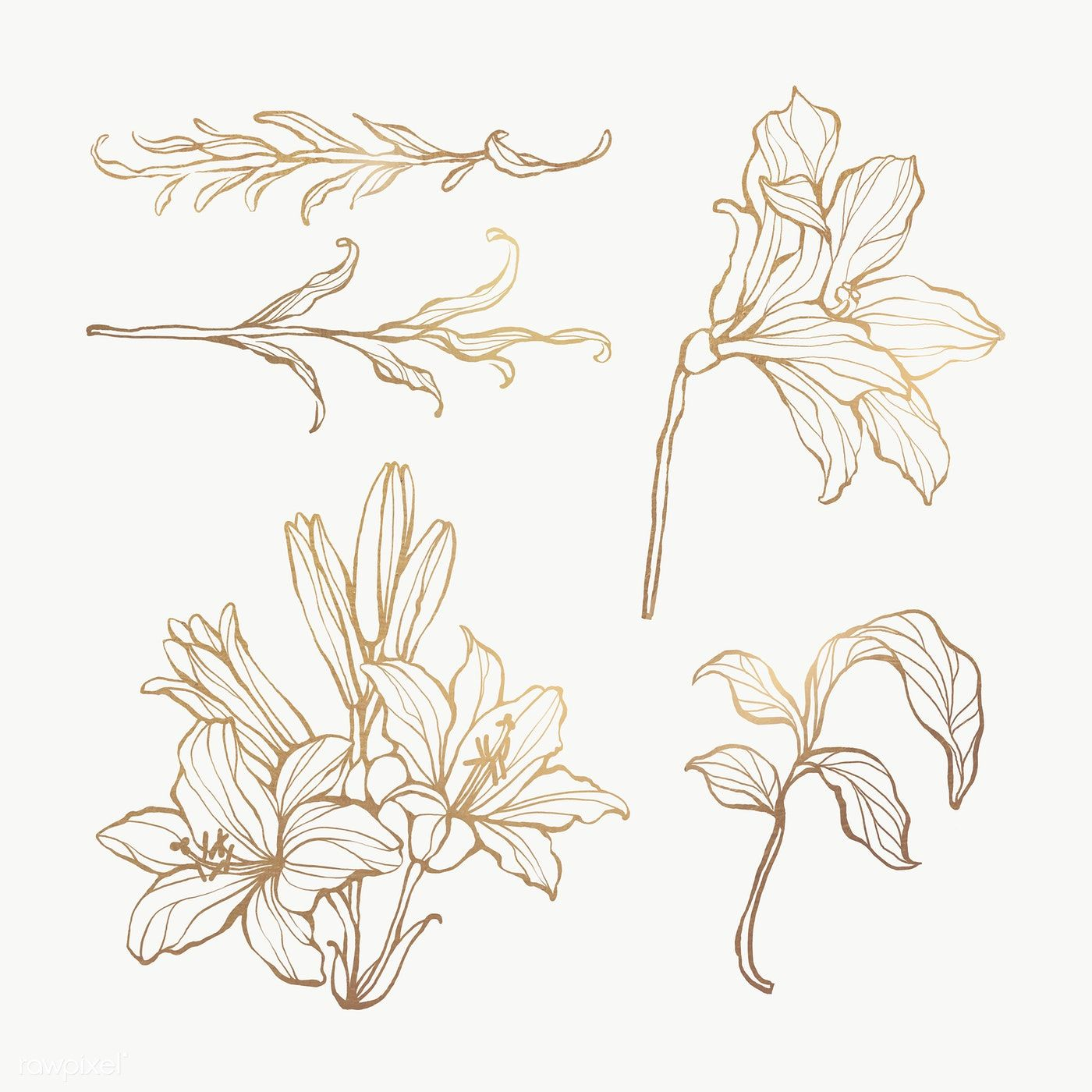 Gold Floral Outline Set Transparent Png Premium Image By Rawpixel Com Nunny Flower Outline Flower Illustration Leaf Outline