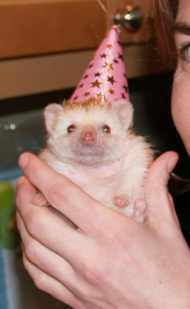 Happy Birthday! Verjaardag Rebecca