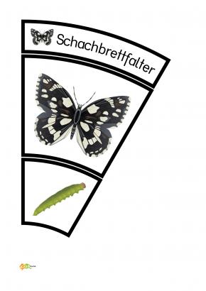 Legekreis Schmetterlinge Kigaportal Kindergarten 13 Schmetterling Projekt Schmetterling Raupe Schmetterling