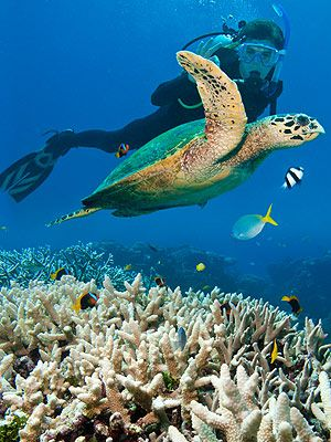 Ready to apply for the best job in the world? Tourism and Australia - marine biologist job description