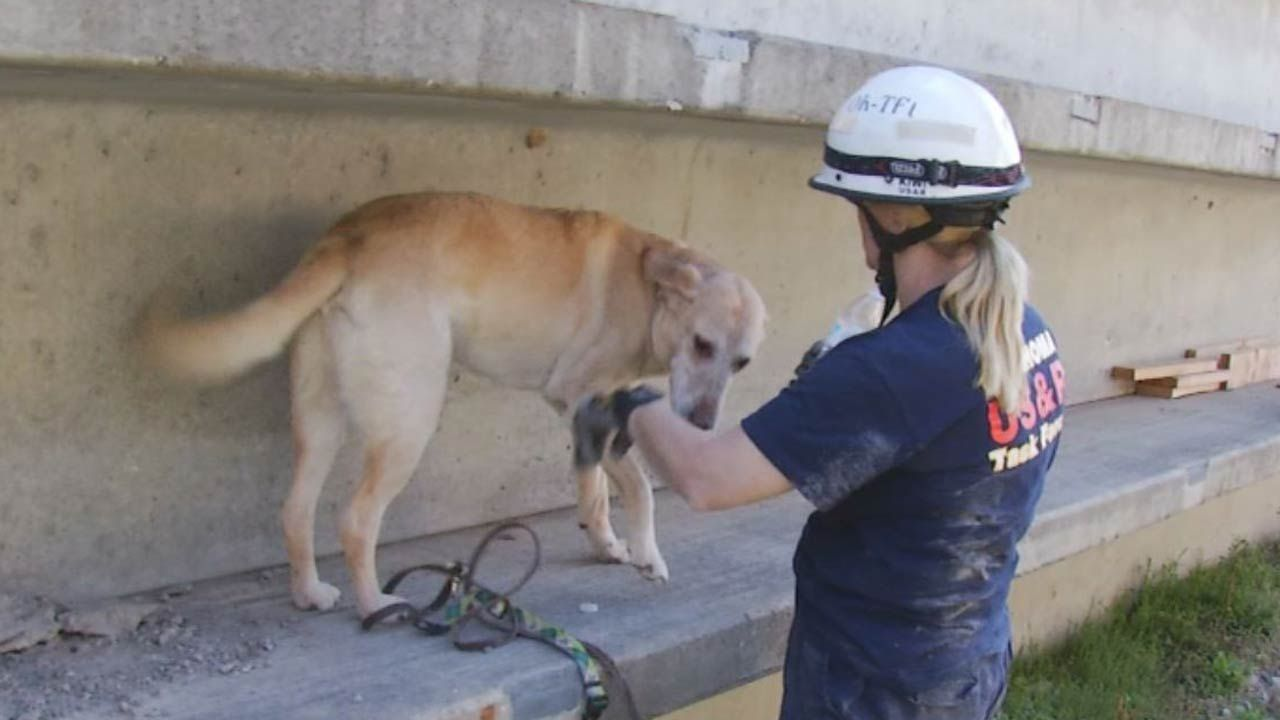 Ranger Roofing Of Oklahoma on Twitter Rescue dogs