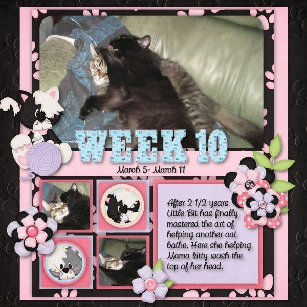 Kit: Meow by Just So Scrappy Template: Picture Perfect 90 by Aprilisa Designs Font: Chatter