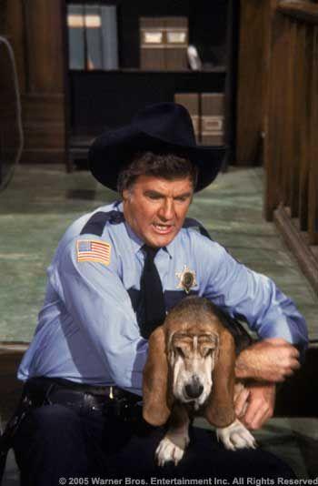 Rosco P Coltrane Dog Name : rosco, coltrane, Dukes, Hazzards, Basset, Hound, Bassett, Hound,, Celebrity