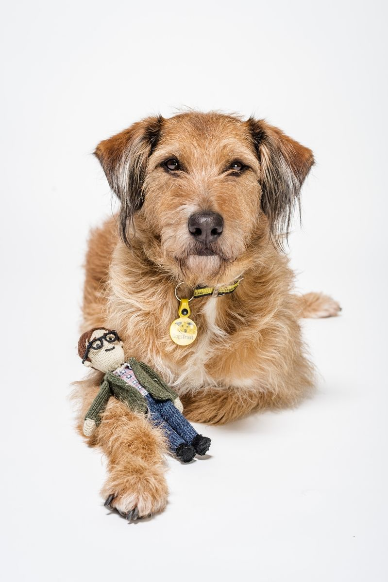 Walter the star of our new TV ad! Tv ads, Dogs trust