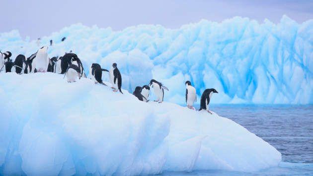 http://www.hln.be/hln/nl/2624/Planet/article/detail/1733420/2013/11/01/Bescherming-marien-gebied-in-Zuidpoolzee-opnieuw-mislukt.dhtml  ik heb de link  er nog is bijgeschreven, want ik weet niet wanneer je op de foto klikt, dat het direct naar die site gaat.