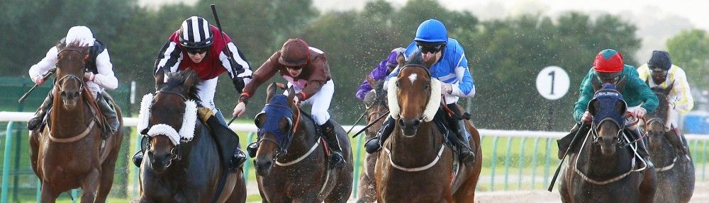 horse betting for profit