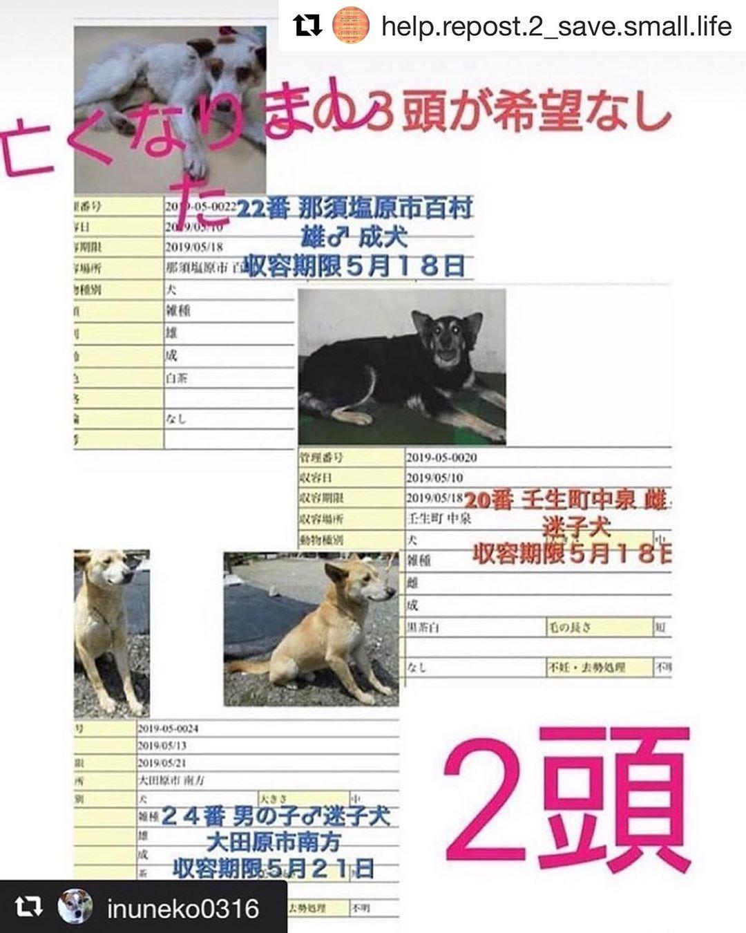 Repost Help Repost 2 Save Small Life With Get Repost Repost Save Dogs Cats Japan Repost Inuneko0316 Repost Savewannyan 拡散希望お願いします 上の子は亡くなって