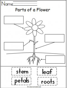 Parts of Plants And Their Functions | Worksheets, Plants and ...