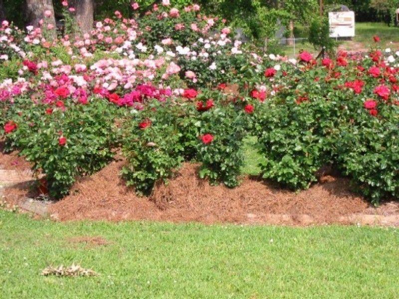 Rose Garden Landscaping Rose Garden Design Rose Garden