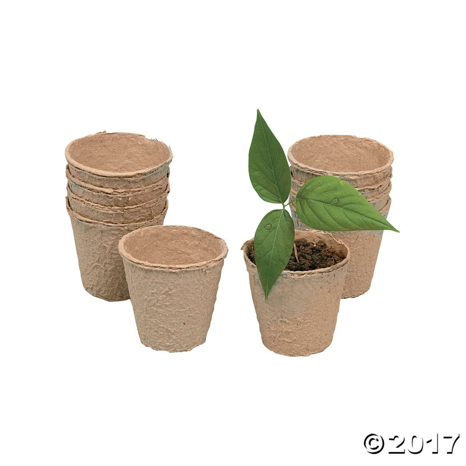Diy Watch It Grow Seed Pots Biodegradable Products 640 x 480