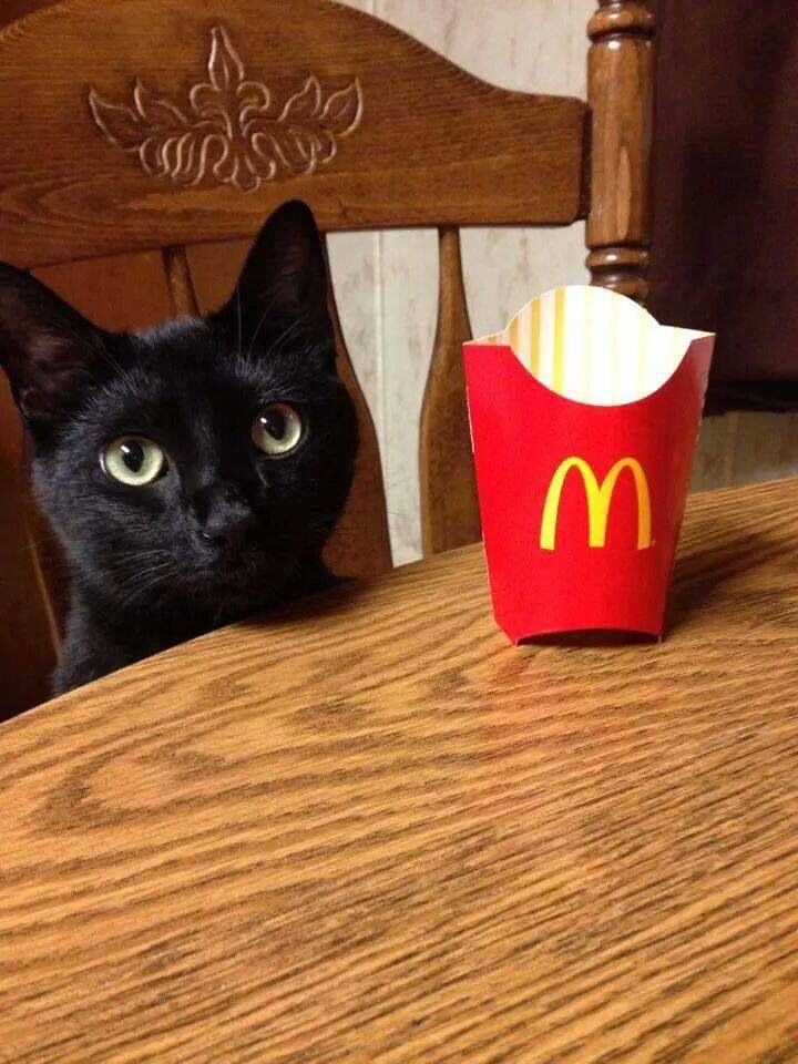 Please, sir...may I have some more?? (Oliverkitty) I