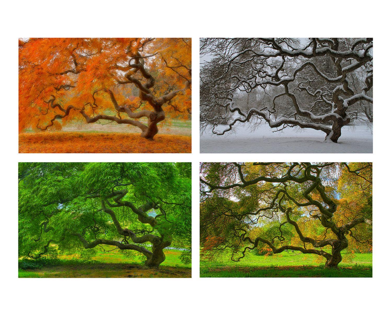 Four Seasons Wall Art, Japanese Maple Tree, 6X9 Print Set, Landscape ...
