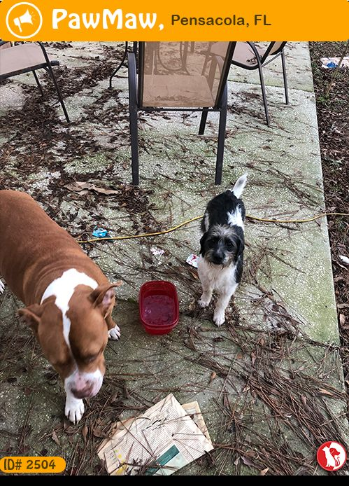 Greenville Humane Society Pet adoption center, Dog