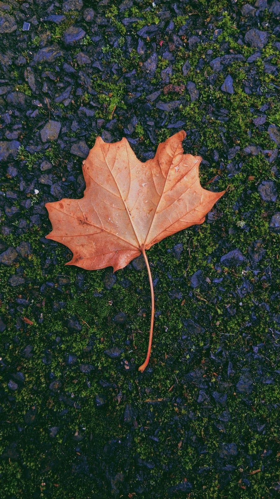 Nature Leaf Id 46472 Foto De Objetos Planos De Fundo Objetos Tumblr
