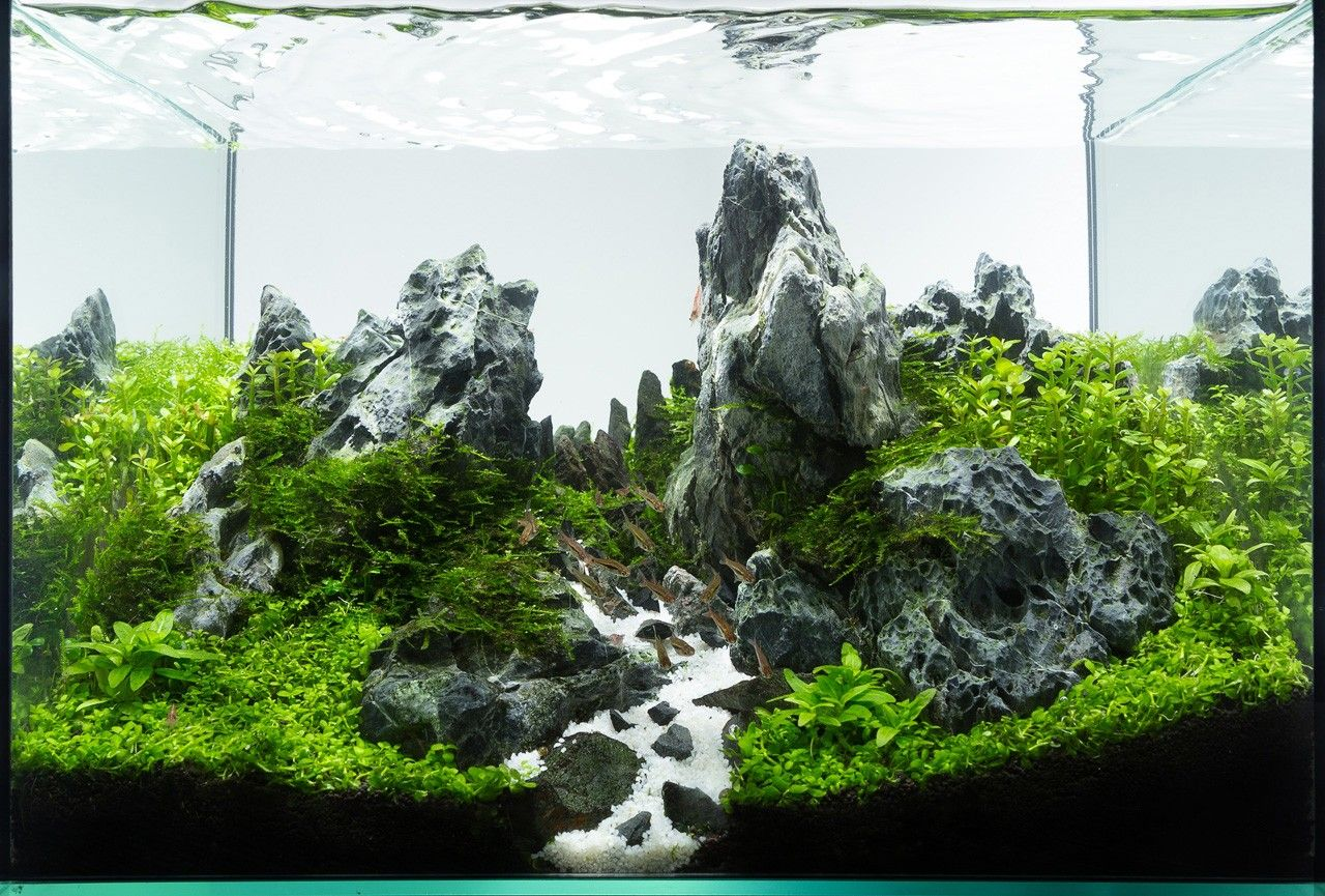 Exceptional Planted Tank Peaks By Roman Holba   Aquascape Awards
