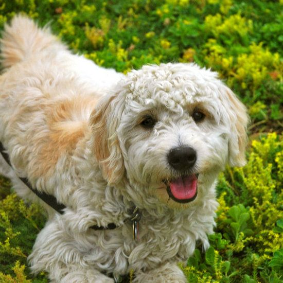 47 Hypoallergenic Dog and Cat Breeds Cat breeds