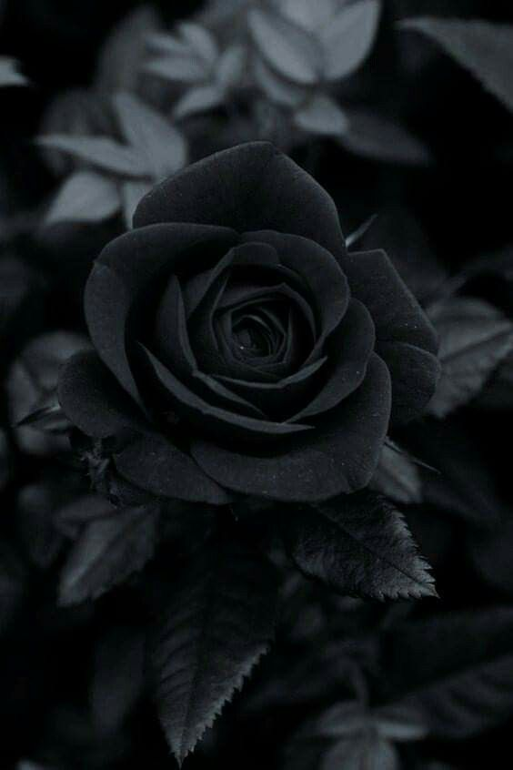 Black Rose Flower Black And White Picture Wall Black And White Aesthetic