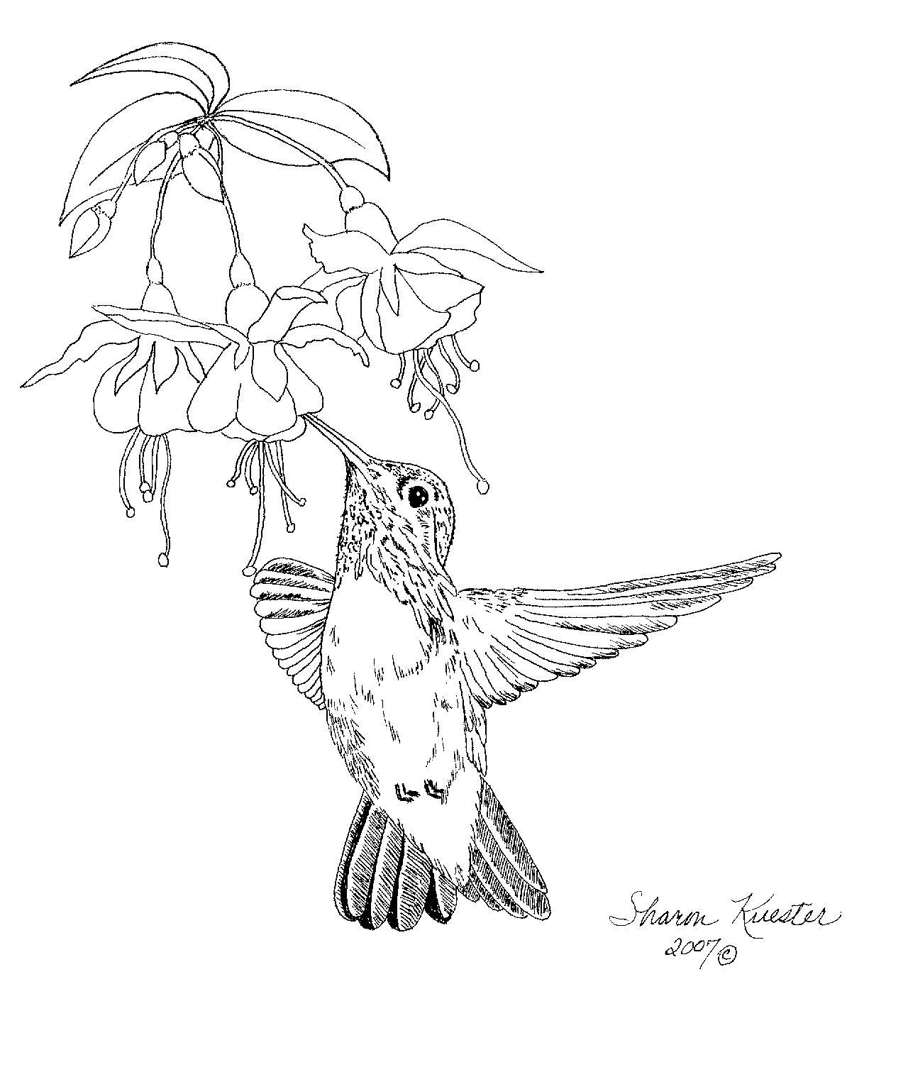 Free Hummingbird Pattern