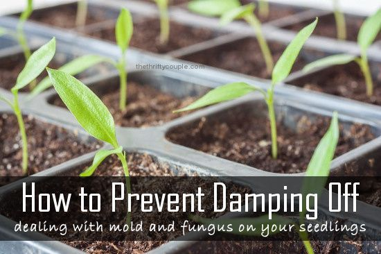 3 Ways To Get Rid Of Mold On Houseplants Wikihow Houseplants Household Plants Indoor Plants Low Light