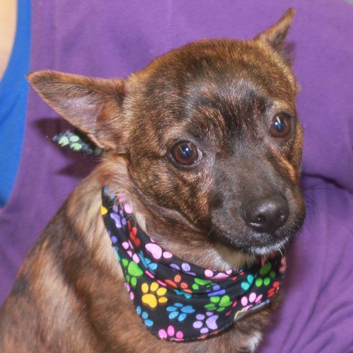 Park Art|My WordPress Blog_Boston Terrier Puppies For Adoption In Ohio