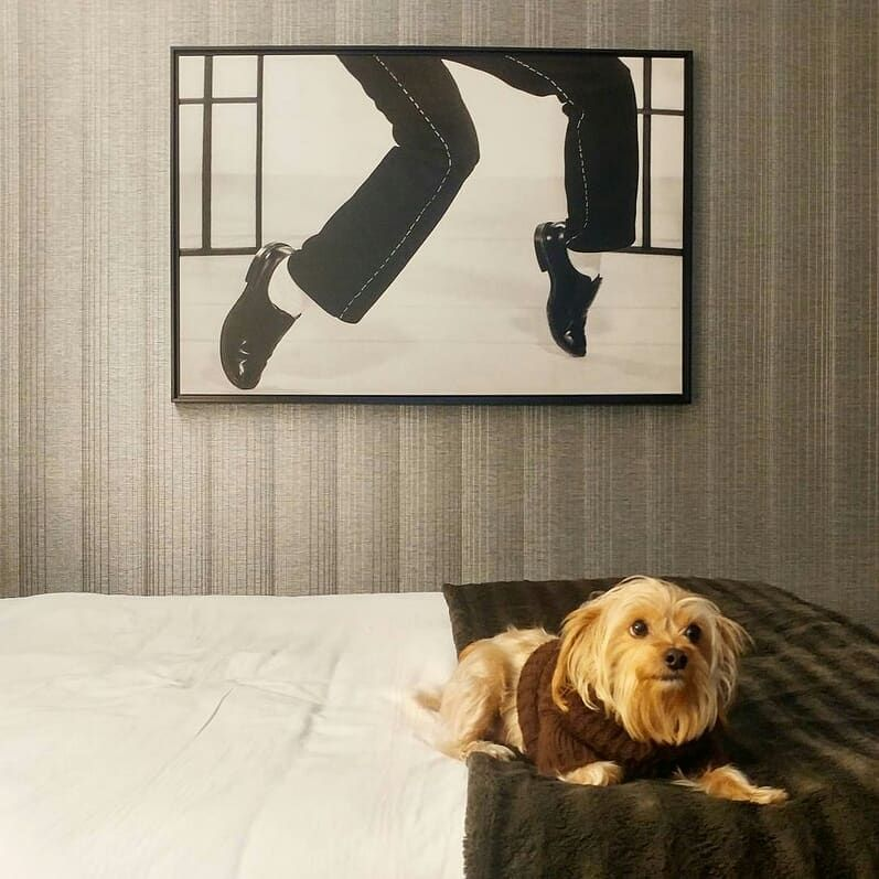 Our Pet Friendly Hotel Memphis Tn The Guest House At Graceland Pet Friendly Hotels Hound Dog Dog Friends