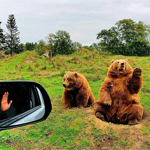 Follow @WildlifePlanet for the most amazing animal photos! Hello, goodbye!   Photo by @atom_photobomb