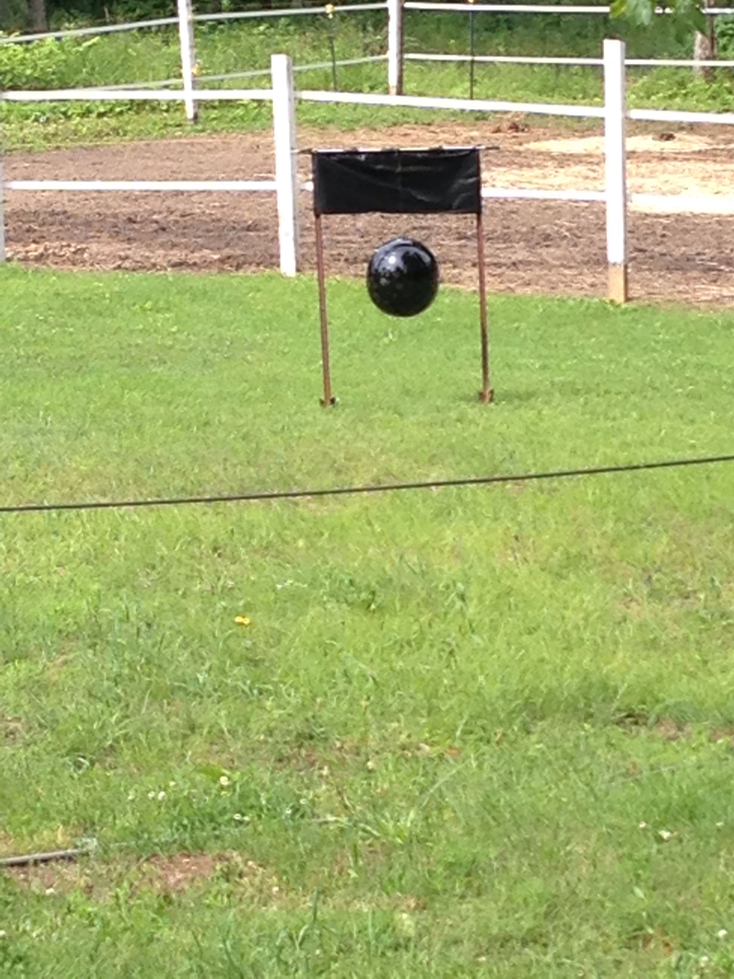 Horsefly Trap Spray Paint A Beach Ball Black And Cover With Tanglefoot Buy It At Any Hardware Store I Swear This Wor Horsefly Trap Diy Fly Trap Horse Fly