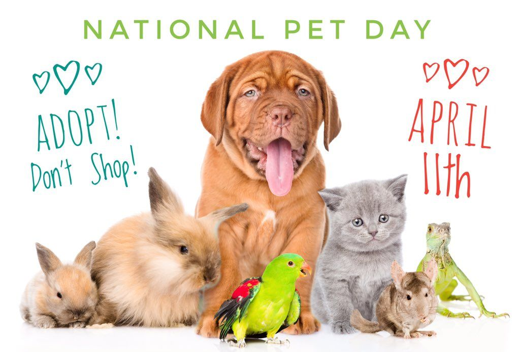 Win 30 Petco Gc Or Paypal Cash National Pet Day Pet Day Love Your Pet Day