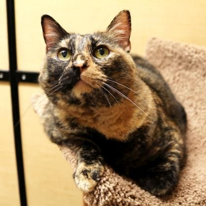 Rosa has been adopted from PetSmart in Bellevue, a Seattle