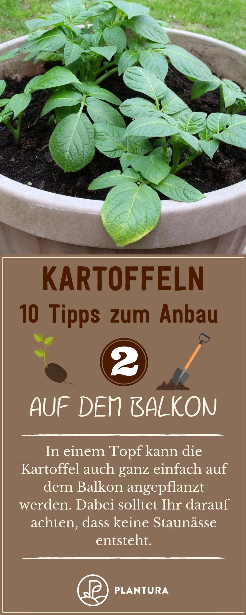 Pin Auf Pflanzen Topf