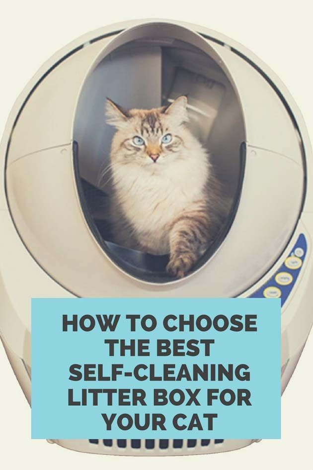 A Comparison Of The Best Automatic Litter Boxes Available