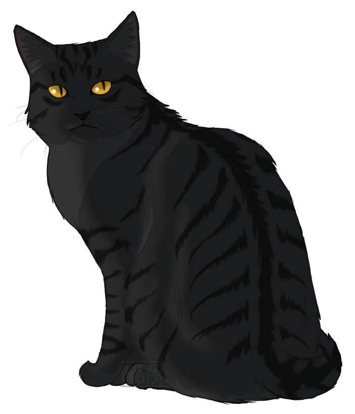 Crowfeather A Warrior In WindClan. Crowfeathers Life Well