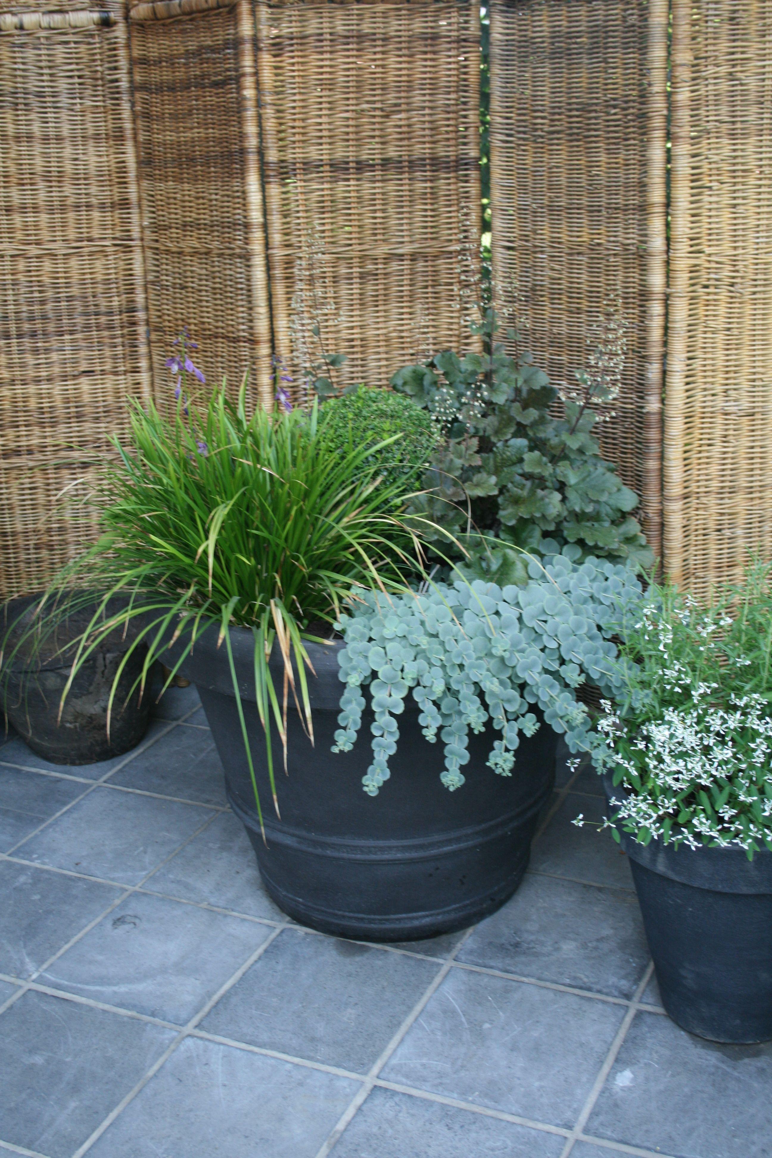 Garten Janssen heuchera liriope und diepenbeek garten janssen pots