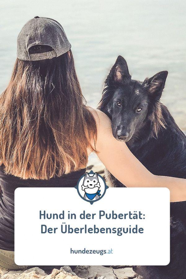 Hund In Der Pubertat Der Uberlebensguide Hunde Hunde Erziehen Hunde Welpen Erziehung