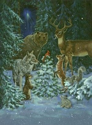 Race Studios - Wildlife - Donna Race