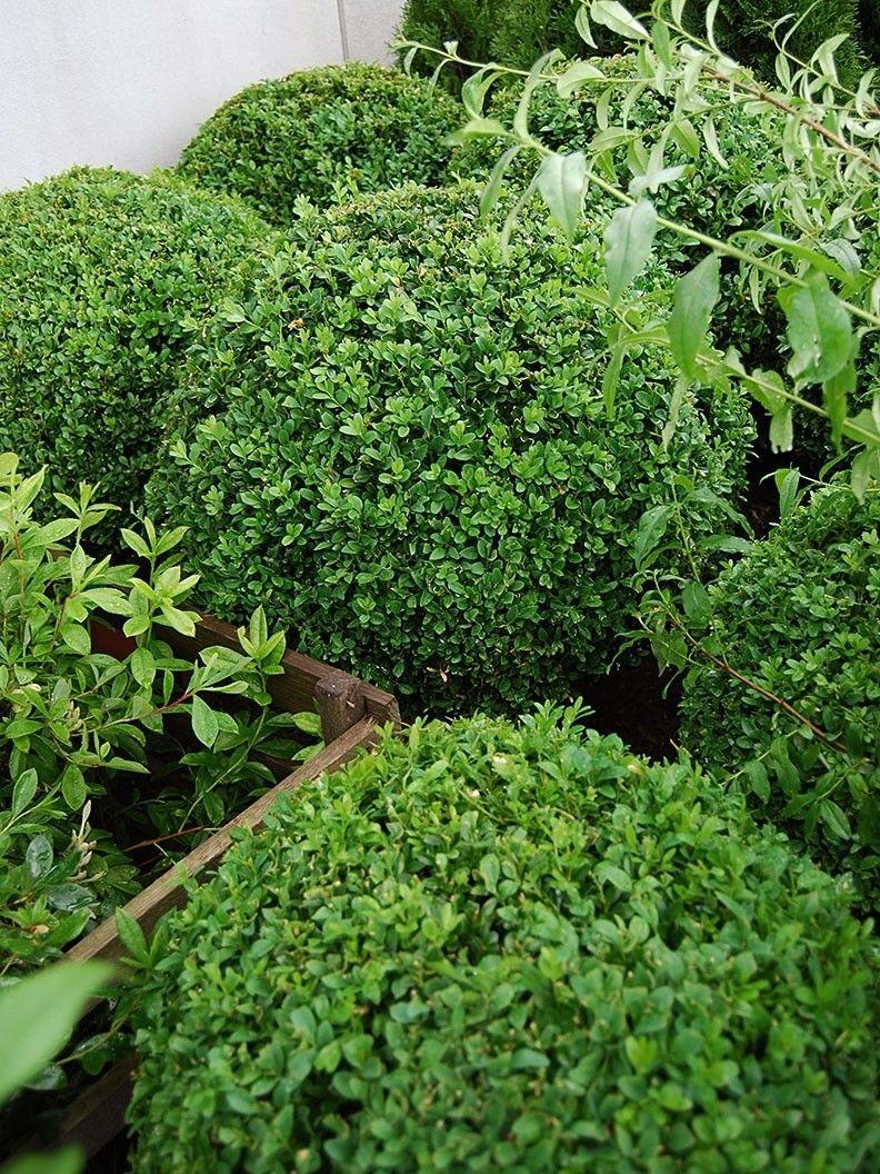 små buskar i rabatt