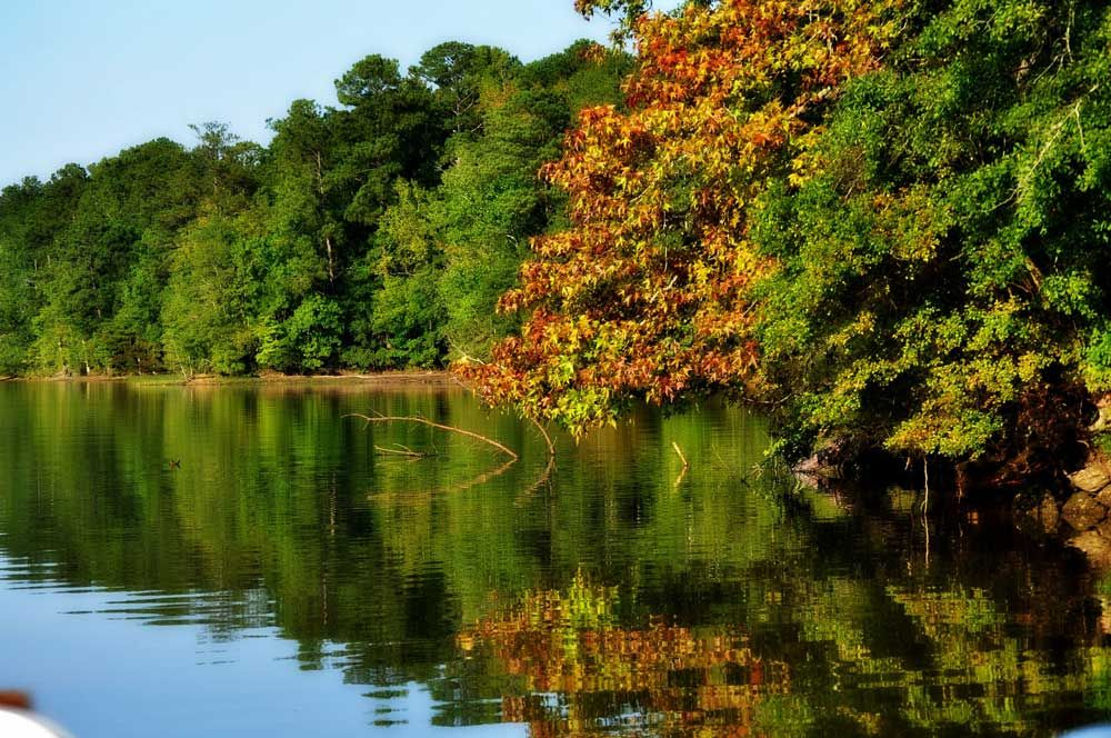 Cherokee Ridge | Alabama Birding TrailsAlabama Birding Trails
